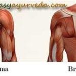 Brihati Marma: Components, Location, Effect Of Injury