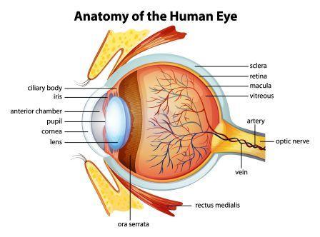 Anatomy of Eye: Netra Rachana: Ayurveda Perspective