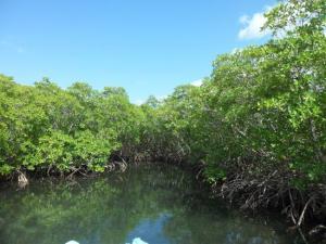 visite-de-la-mangrove