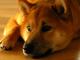 Dogethereum dirilis