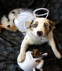Halloween Costumes For Dogs: An Overload Of Cuteness - Easyday