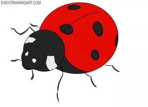 ladybug draw drawing easy