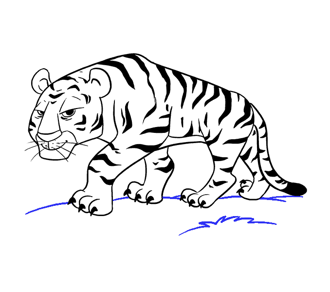 How To Draw A Cartoon Tiger In A Few Easy Steps Easy Drawing Guides