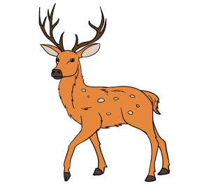 deer draw drawing easy clipart buck steps dear colorful female step tan guides few clipartmag markings brown head