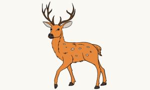deer draw drawing easy steps guides furries few adult getdrawings