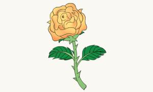 rose drawing draw orange easy roses detailed tutorial drawings stem ways flower flowers learn paintingvalley