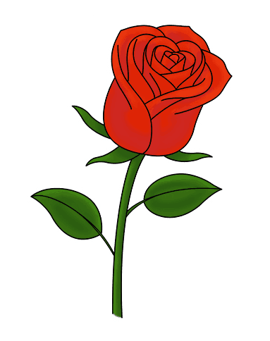 Rose Drawing Images : drawing, images, Learn