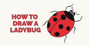 ladybug draw drawing easy drawings ladybird step easydrawingguides tutorial really paintingvalley