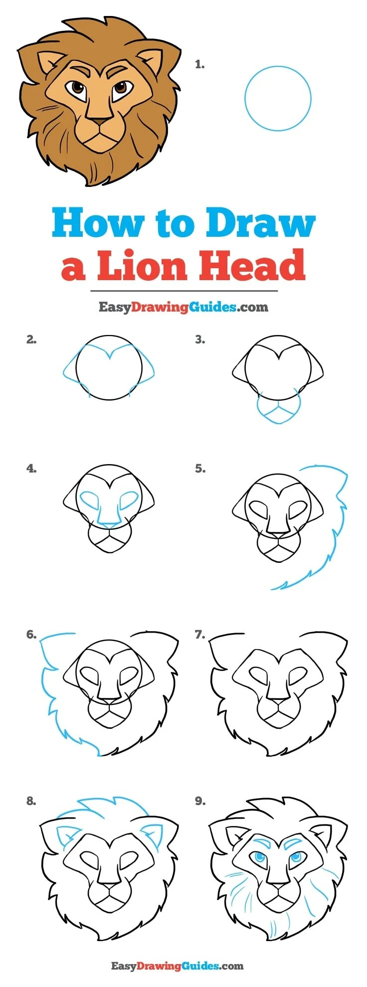 How To Draw A Lioness : lioness, Really, Drawing, Tutorial