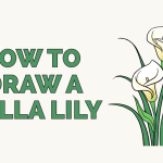 How To Draw A Calla Lily Really Easy Drawing Tutorial