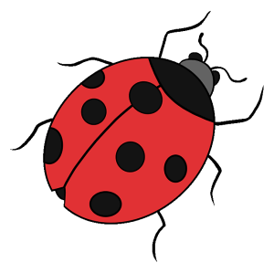 ladybug draw drawing easy ladybird drawings step bug lady ladybugs coloring line insects sheets spots beetle across printable yellow orange