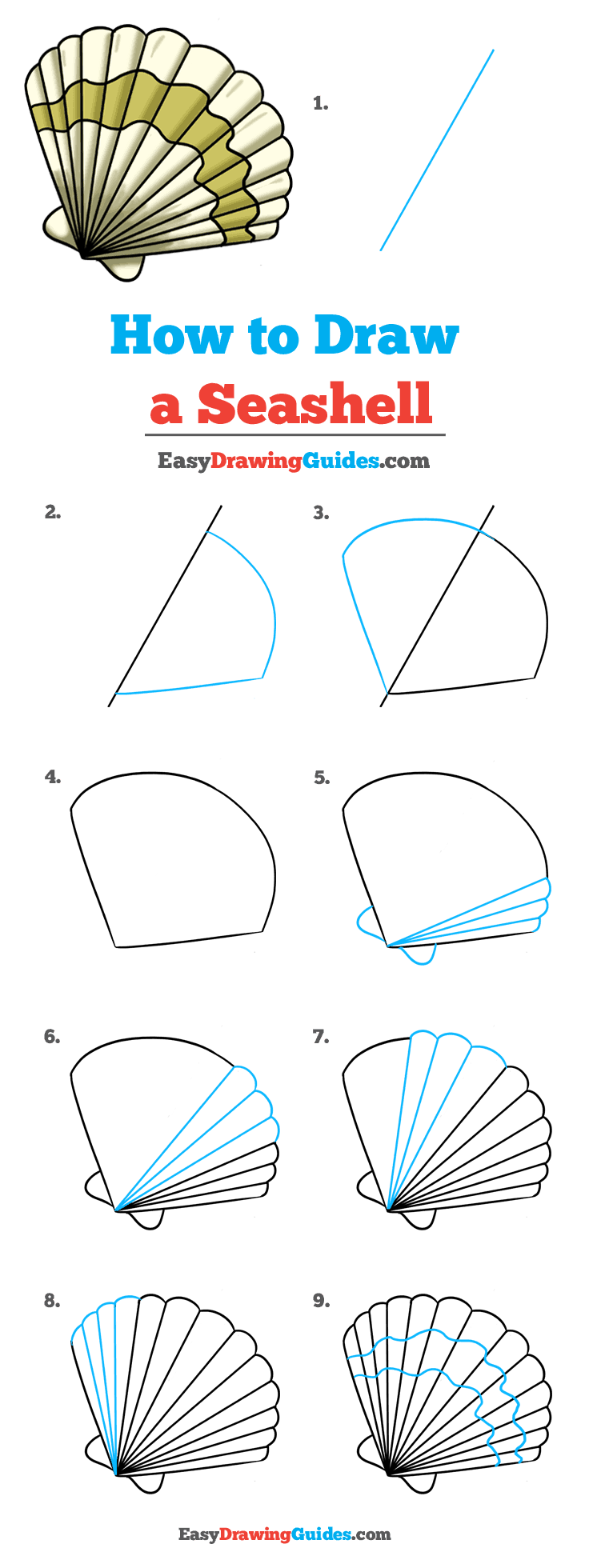 How To Draw A Seashell : seashell, Seashell, Really, Drawing, Tutorial