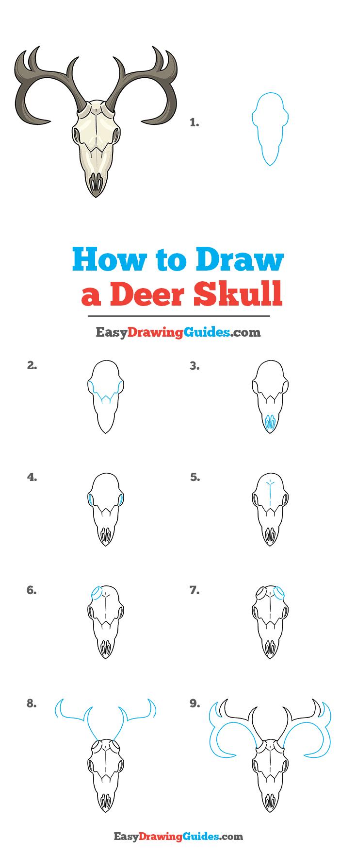 Deer Head How To Draw A Deer : Skull, Really, Drawing, Tutorial