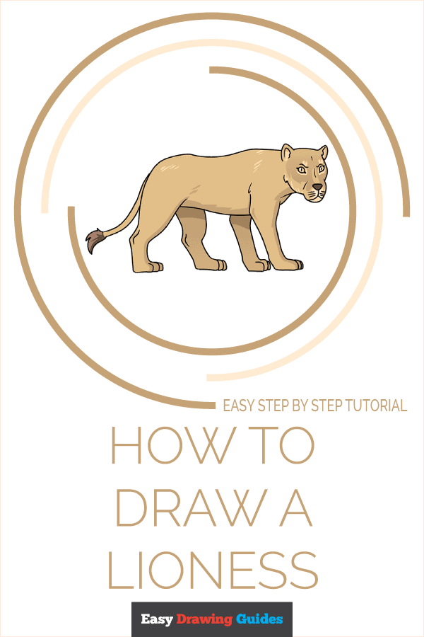 How To Draw A Lioness : lioness, Lioness, Really, Drawing, Tutorial