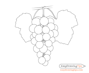 How to Draw Grapes Step by Step Tutorial EasyDrawingTips