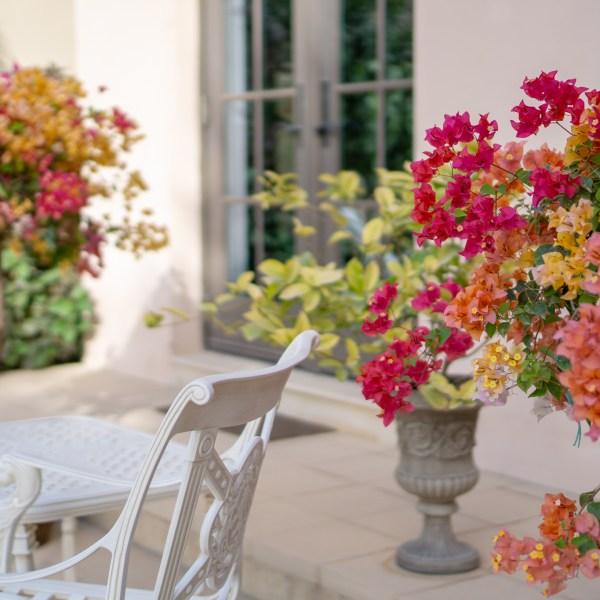 Colorful bougainvillea in the pots