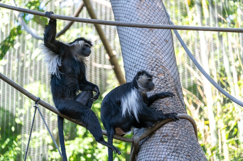 San Diego Zoo monkeys