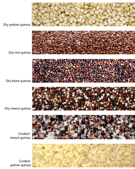 quinoa types dark red white cooked