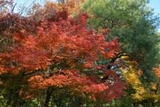 鶴見緑地の紅葉2014その23