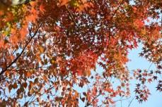 鶴見緑地の紅葉2014その31