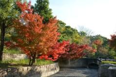 鶴見緑地の紅葉2014その2