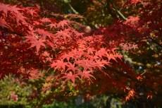 鶴見緑地の紅葉2014その3