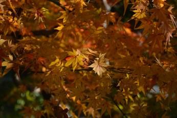 鶴見緑地の紅葉2014その7