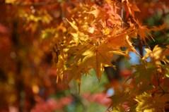 鶴見緑地の紅葉2014その8