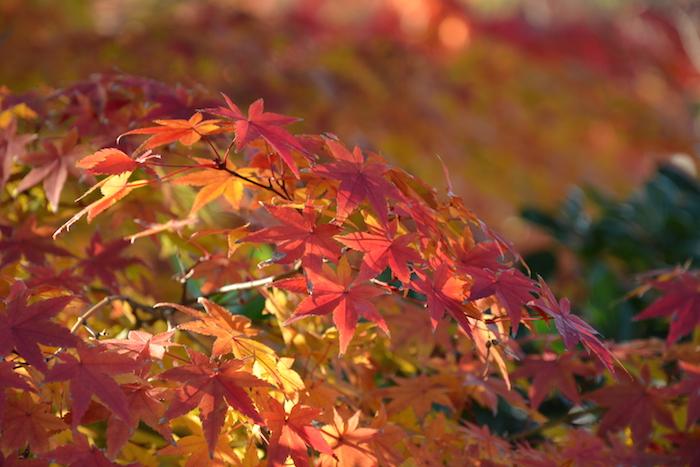 鶴見緑地の紅葉 2014
