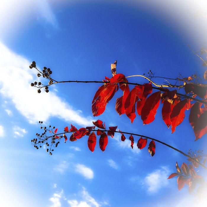 深北緑地の紅葉