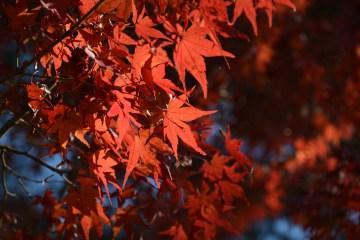 D7100で撮った奈良公園の紅葉 その12