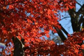 D7100で撮った奈良公園の紅葉 その14