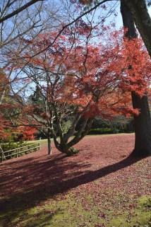 D7100で撮った奈良公園の紅葉 その3