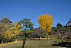 D7100で撮った奈良公園の紅葉 その5