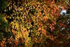 D7100で撮った奈良公園の紅葉 その8