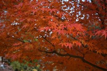 D7100で撮った奈良公園の紅葉 その10