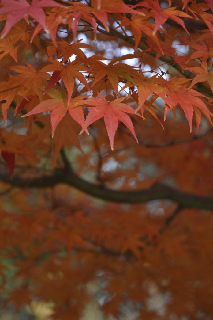 D7100で撮った奈良公園の紅葉 その11