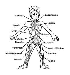 main body parts image science for kids all about your body [ 1024 x 1024 Pixel ]