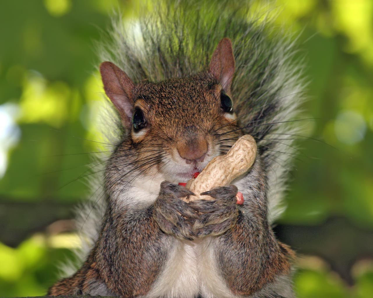 Facts About Squirrels Archives