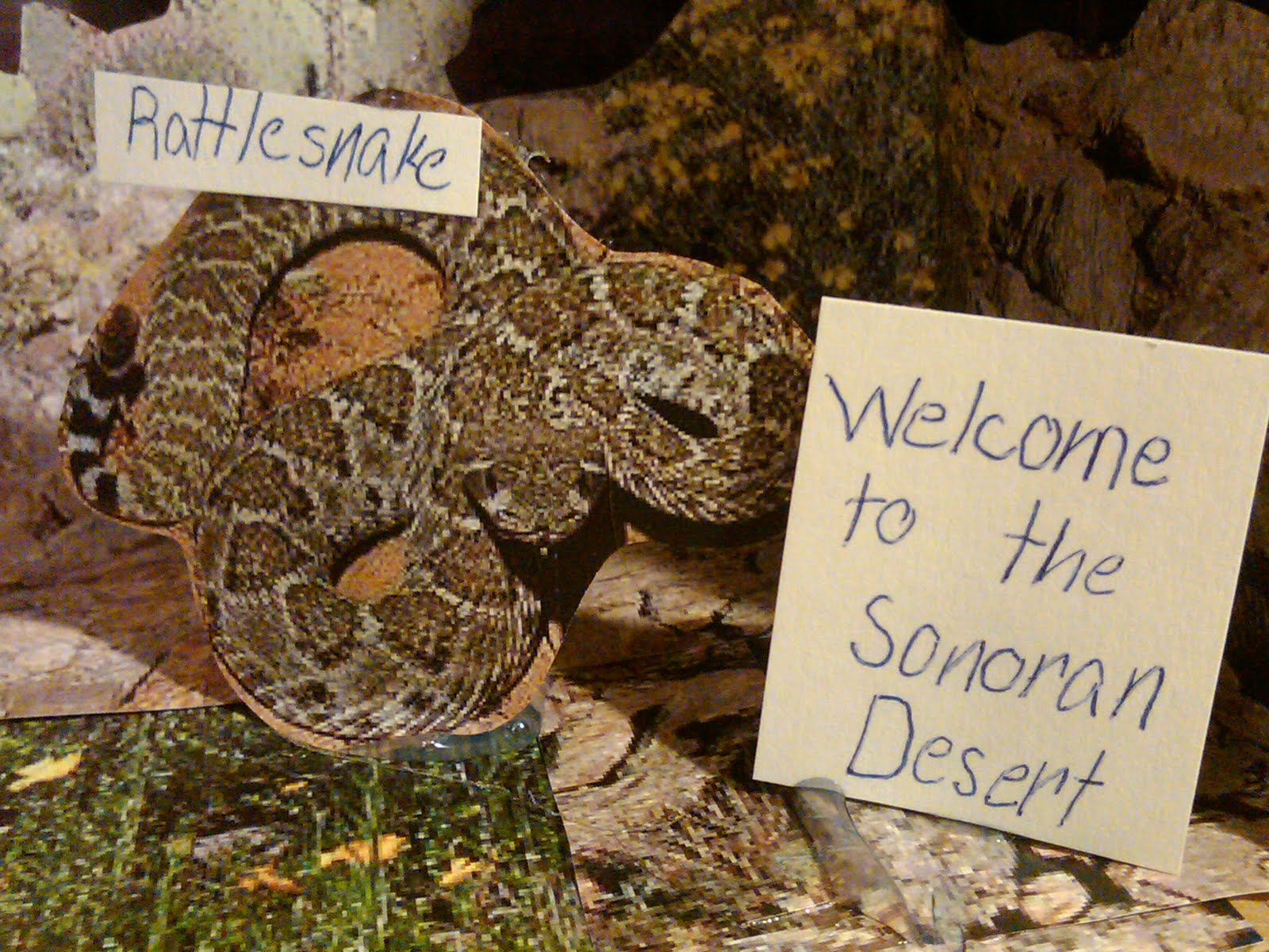 Rattlesnakes In The Sonoran Desert