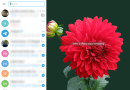 How to change chat background in Telegram