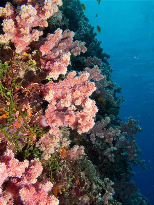 barriera corallina zanzibar img