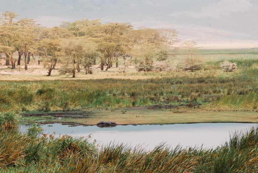 ngorongoro safari zanzibar