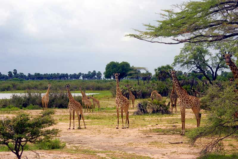 Selous Game Reserve img