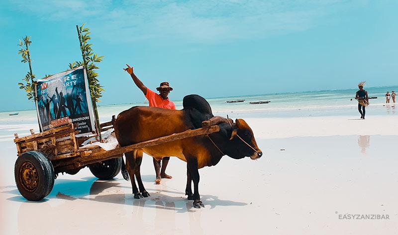 mucca-spiaggia