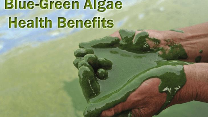 liquid blue green algae in hands
