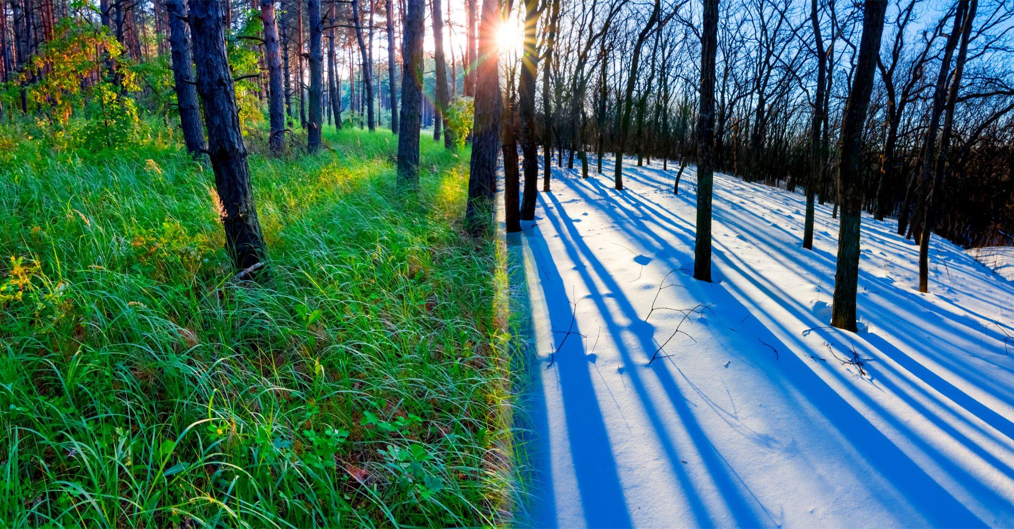 夏と冬の景色が混ざった写真