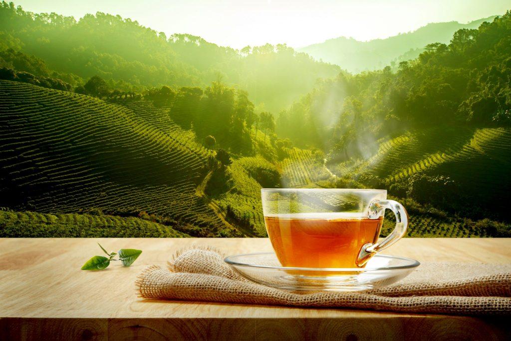 大自然の中で飲むお茶