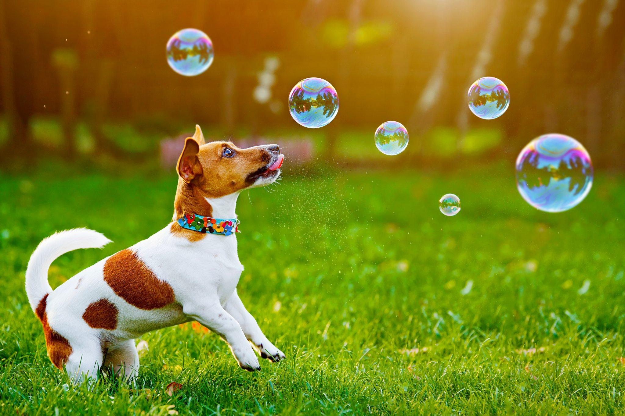石鹸の泡に驚いている犬