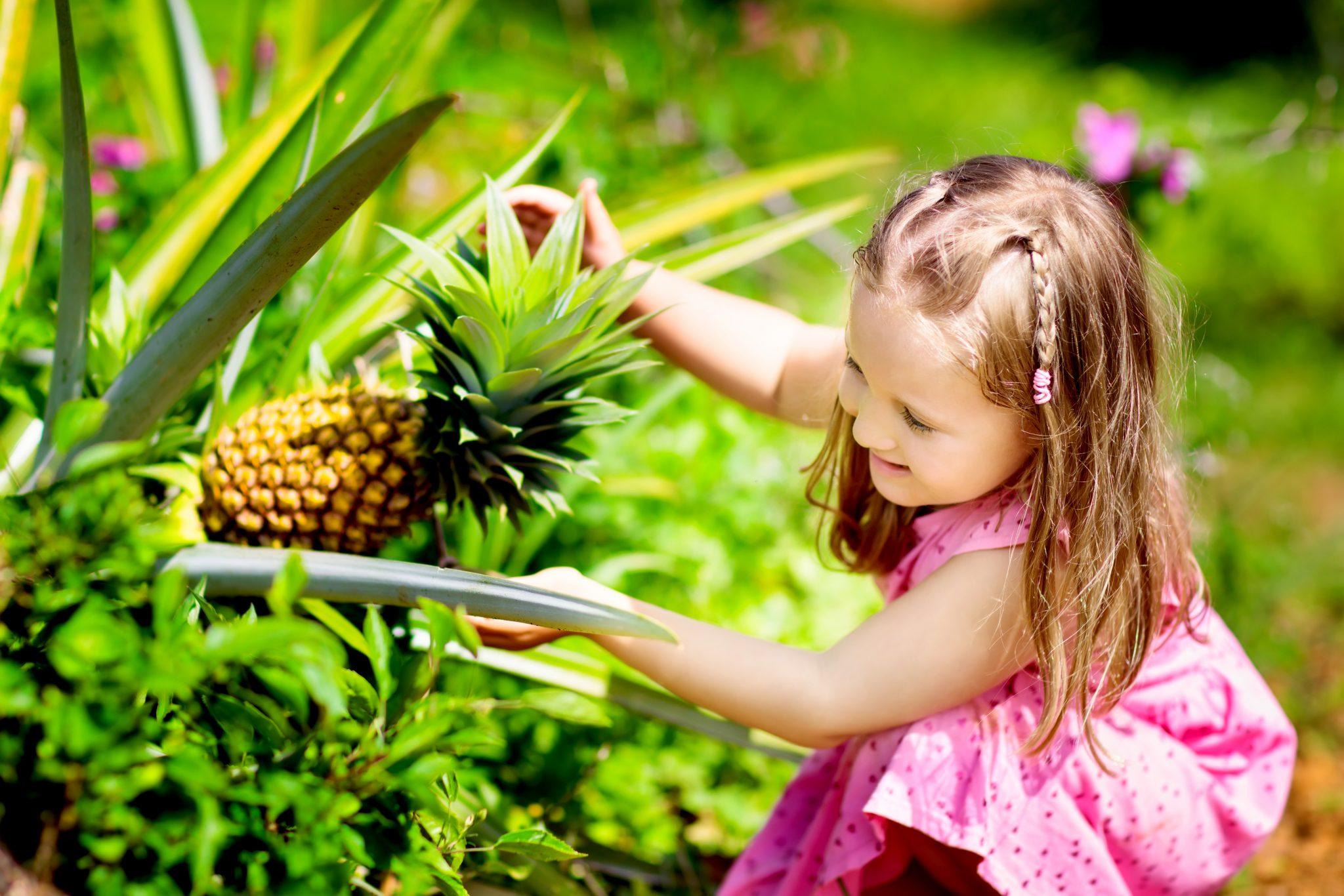 パイナップルを収穫しようとしている女の子